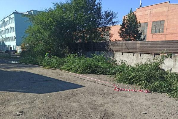 Вырубка кустарника подготовка территории строительства для сооружения опоры №2. Правый берег